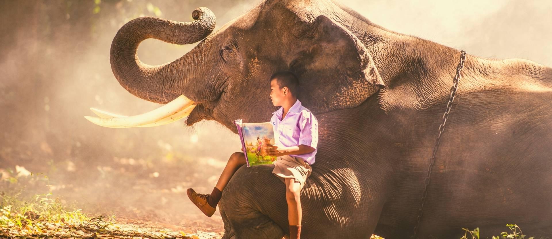Tajomstvo života, ktoré ukrýva Kniha džunglí